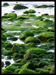 Rocks of Green by Mogrianne