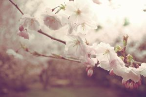 Spring miracle by LoveSexAndDrugs