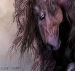 Equus by cwrw