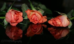 Triples by CFTMPhotography