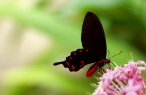 Black and Red by glimmering-butterfly