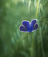 Soft Blue Afternoon by Callu