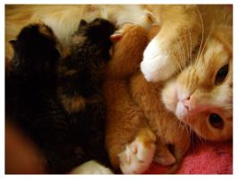 Newborn Kittens by deconstructedstars