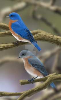Eastern Bluebirds by InvisibleCatfish