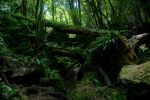 Puzzlewood 04 Stock by lokinststock