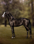 Stallion by a-Astree