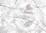 Owl by Mauglia