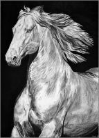 Drawing- Cremello Horse by Ennete