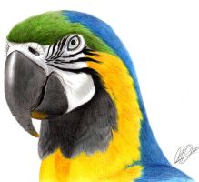 Macaw by rpowell77