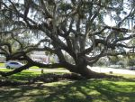 Dave\'s Pics 2 317 Zacchaeus Tree Florida Vac 2014 by crazygardener