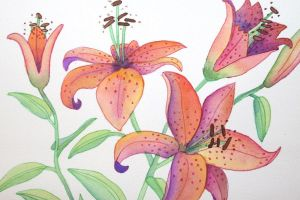 Pink and Purple Lillies by JadenDreamer