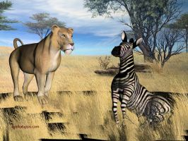 Zebra and Lion by apokalupsis