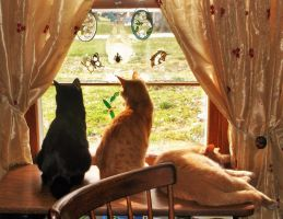 Two out of three felines love Kitty TV! by MystMoonstruck