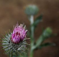 Thistle by creativemikey
