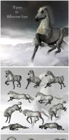 30 poses for Millenium Horse by ChristineG