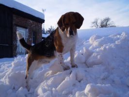 Beagle in winter 2 by PatrikEffect