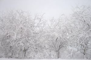 Mg 8486 by FigoTheCat