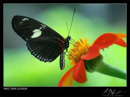 Nectar Lover by eugenedeloyola