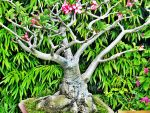 Bonsai by live-life-fully
