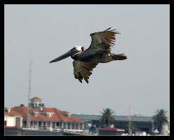 Galveston Island 2007 2 by sandwedge