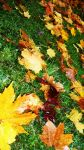Autumn Leaves by Jenny-Cat-Miaow