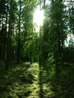 Enchanted forest 7 by Eralor