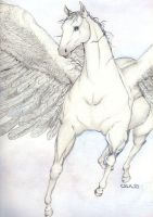 Pegasus by teutelquessir
