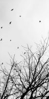 .birds. by witchlady750