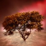 Golden Autumn Tree by JacqChristiaan