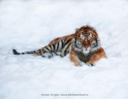 Snow-cat by Jagu77