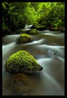 Spring Flow by hikester