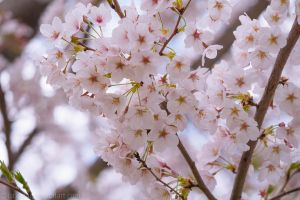 In bloom II by larksgar