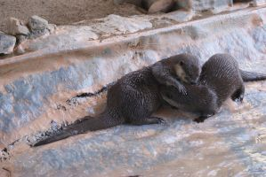 Underwater World : Otters by Aximili-6116