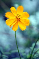 Orange Flower by CASPER1830
