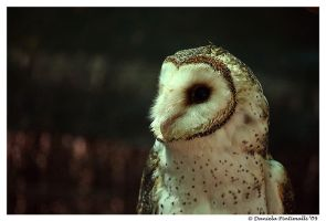 Masked Owl Profile by TVD-Photography