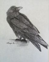 Raven by wolfmeg