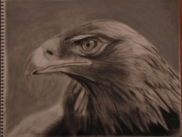 Golden Eagle by Jbergas