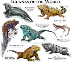 Iguanas of the World by rogerdhall
