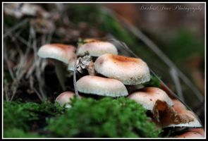 Mushroom Spotting 011 by DarkestFear