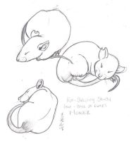 Rat Sleep Study by Toren-Al