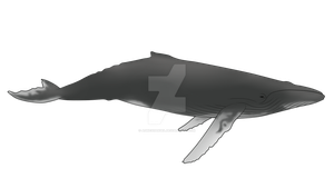 Humpback whale by AgnessAngel
