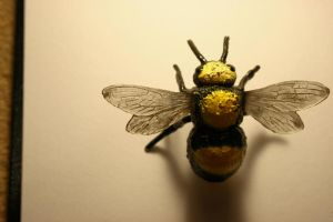 Bee by myp55