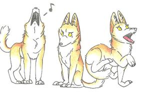 Coyote sketches by Dead-Raccoons