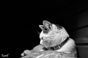 Cat resting on the couch by Filipoe