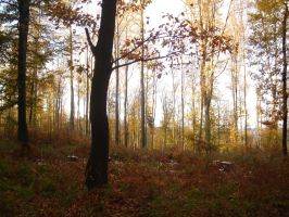 autumn forest 3 by sacral-stock