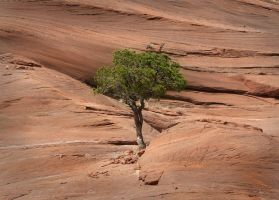 Lonesome Tree by shawnstorm