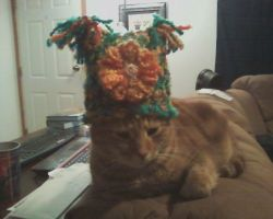 Hat of Cat Detainment by thecharmedmuse