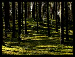 deep forest by rollingpeople