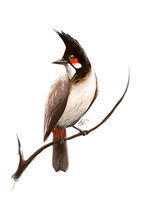Red-Whiskered Bulbul by Hobbitato