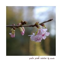 Pale Pink Winter by Eiande